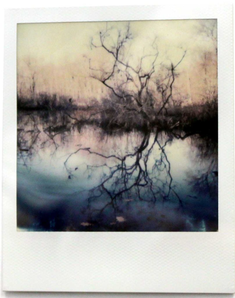 Wetland in Spring by Mary Defer, Polaroid shot