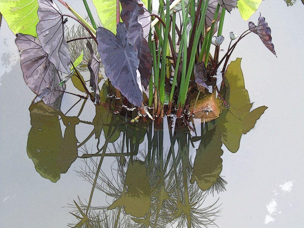 MaritaBitans Placid Pond Kaleidoscope
