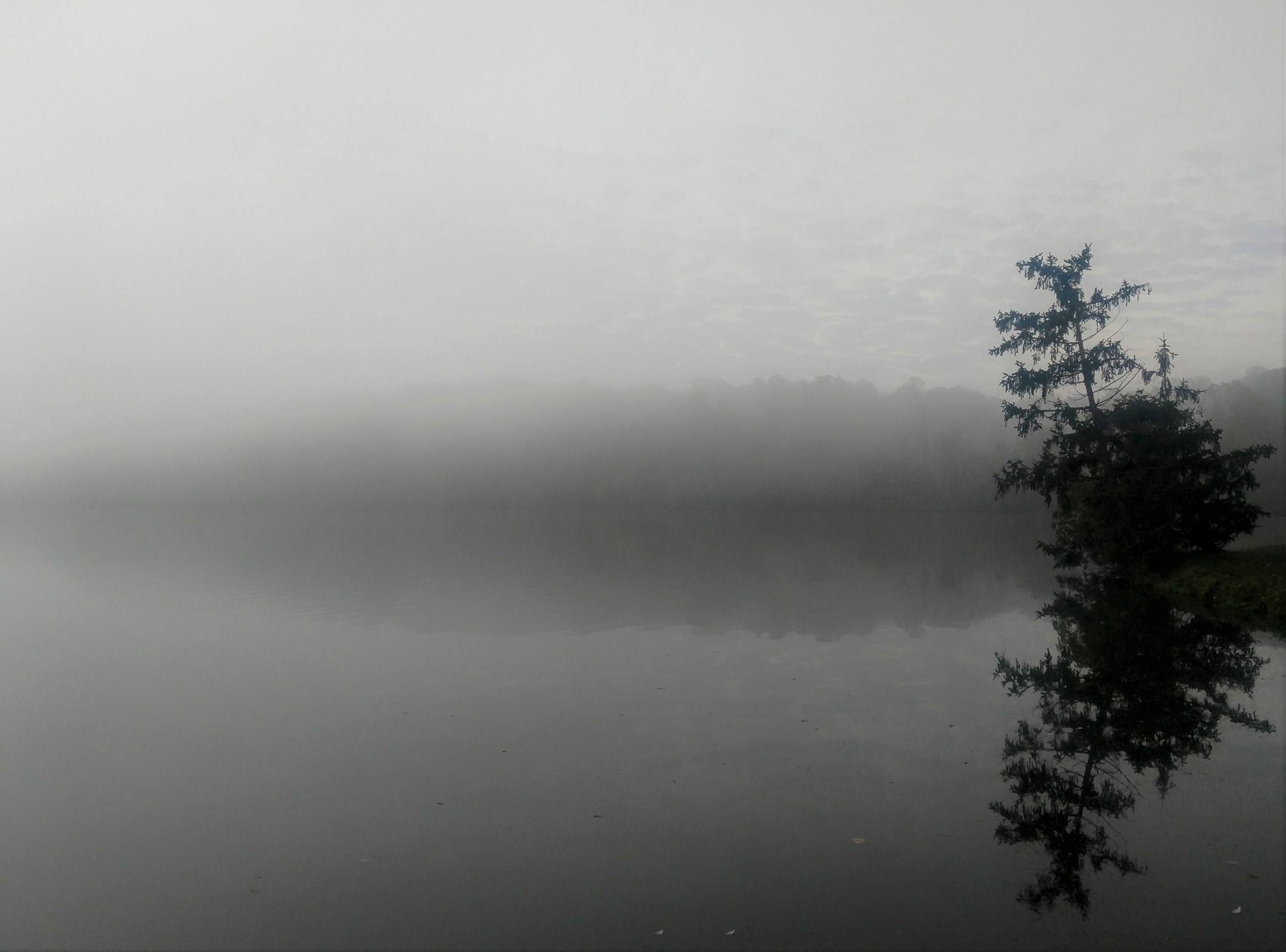 """Foggy Morning at the Lake"" by Brad Nellis"